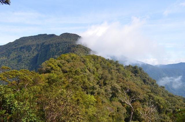 taman nasional bukit raya bukit baka